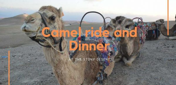 Camel ride and Dinner