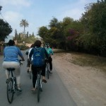 A bike tour in the Palmeraie