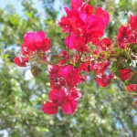 Flowers in Parc El Harti