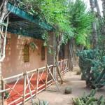 Jardin Majorelle Cactus Garden