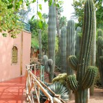 Jardin Majorelle Cactus Garden and Wall