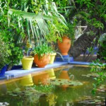 Jardin Majorelle Colourful Pond