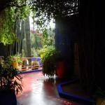 Jardin Majorelle Shadow