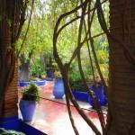 Jardin Majorelle Trees