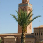 Les Jardins De La Koutoubia and a palm tree