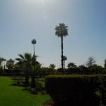 Les Jardins De La Koutoubia palm trees
