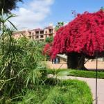 Tree Blossom in Parc El Harti